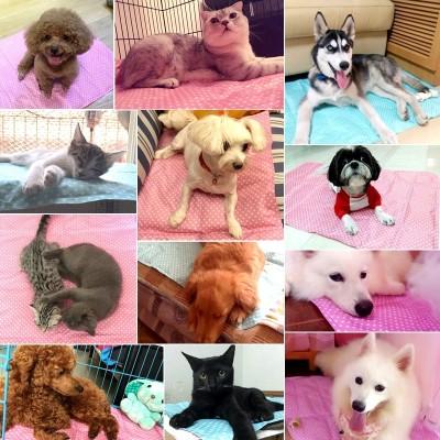 Pet dog summer ice pad cool mat mat summer cool gel mat cat cat dog bite dog pad
